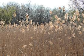 plants native to indiana indiana woodland steward invasive species u2013 how do they impact