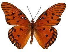 butterfly species list butterfly dans butterfly farm central florida