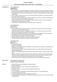Msl Resume Sample Vp Marketing Resume Samples Velvet Jobs