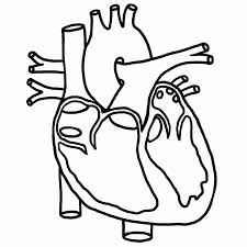 circulatory system coloring page coloring pages ideas u0026 reviews