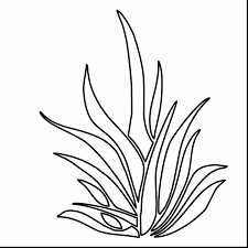 ocean coloring pages best picture ocean plants coloring pages at