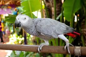 Parrot Decorations Home The Top Loudest Parrot Species
