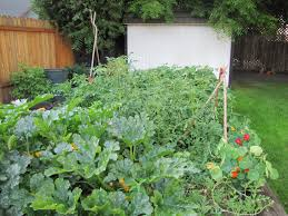 outdoor and patio wonderful backyard vegetable garden mixed with