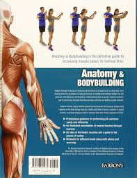 Anatomy Videos Free Download Anatomy U0026 Bodybuilding A Complete Visual Guide Ricardo Canovas