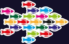 half fish training lesson plans