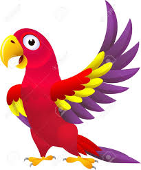 parrot clipart talking bird pencil and in color parrot clipart