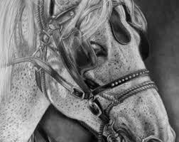 bison portrait fine art print graphite pencil animal drawing