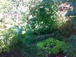 backyard gardening companion planting
