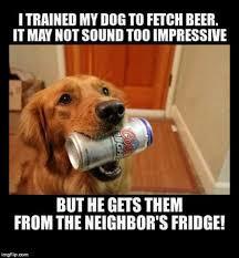 funny dog memes imgflip