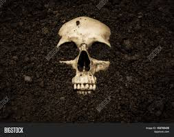 human skull in soil horror background for halloween concept and