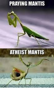 Mantis Meme - praying mantis atheist mantis meme on me me