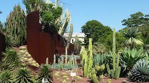 100 cactus garden design ideas perfect indoor cactus garden