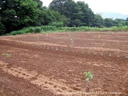 bershka si鑒e social herb science archive 植物性有機農法によるハーブ栽培