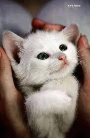 Cat Photo Album Cat U0027s Album Home Facebook