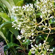 easy houseplants to care for indoor plants fffbc ghk schefflera s