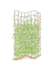 kinds of tomato trellis on sale and where to use them in your
