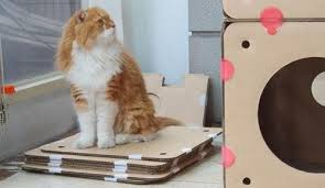 Cats In Small Spaces Video - boxkitty u2014 shoebox dwelling finding comfort style and dignity