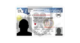 maryland drivers license template