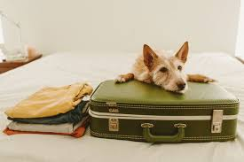 how to travel with pets travel leisure