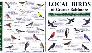 Maryland birds images Local birds quick guides to nature science jpg