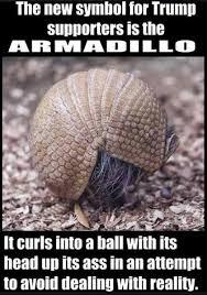 Armadillo Meme - trumpadillos meme by kushiemonster memedroid