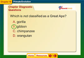 chapter 16 primate evolution ppt video online download