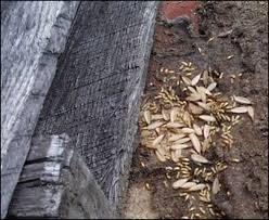 Winged Termites In Bathroom Best 25 Signs Of Termites Ideas On Pinterest Navarre Florida