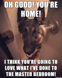 German Shepherd Memes - 20 cute and funny german shepherd memes sayingimages com