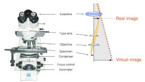 a light microscope image is formed by light microscopy myscope