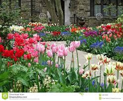 cliserpudo backyard tulip garden images