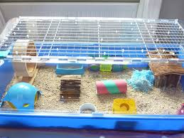 Petsmart Hamster Cages Pin By Animals On The Hill On Hamster Pinterest Hamster Stuff