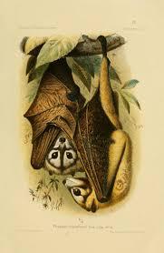 576 best bats images on pinterest bats halloween bats and