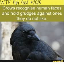 Crow Meme - 25 best memes about where is eileen the crow where is eileen