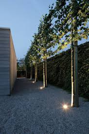 37 best pleached trees images on pinterest garden gardens and