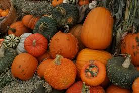 halloween city colorado springs colorado springs pumpkin patches 2017 healthy happy thrifty family