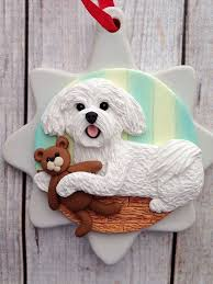 19 best maltese images on maltese puppies cake