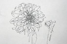 inspired by dahlias photos watercolors pen u0026 ink drawings