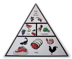 review of the paleo solution the original human diet stickitmedia
