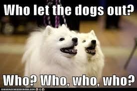 Who Let The Dogs Out Meme - who let the dogs out dogs know your meme