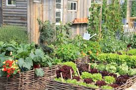 organic living in a modern world olio essentials