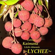lychee fruit inside polynesian produce stand lychee cultivar kaimana litchi