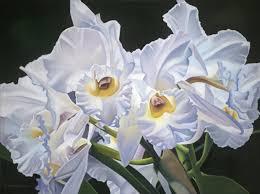 white orchids susan landino edwards page 5