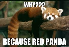 Funny Panda Memes - funny red panda memes