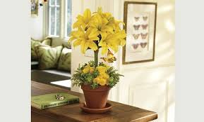 flower delivery rochester ny same day rochester flower delivery send flowers to new york 1st