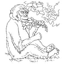 cute monkey coloring pages printable coloring pages ideas