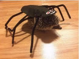 Spider Halloween Costume Dogs Halloween Costume Ideas Kids Toddlers Babies Infants Pets Diy