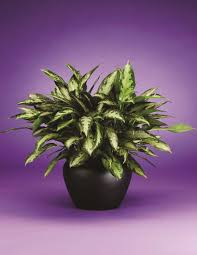 Low Light Flowering Plants by Find The Right Office Plant With Our Plant Brochure Phillip U0027s
