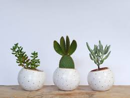 Ceramic Succulent Planter by Small Handmade White Ceramic Succulent Planter With Golden