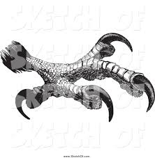 drawing of black and white sketched eagle talons by bestvector 778