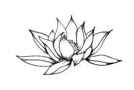 simple lotus flower sketch colouring page colouring tube